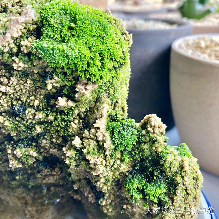 苔藓算是移植成活了_植物