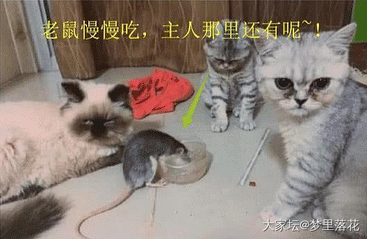 看圖感受心情~_猫