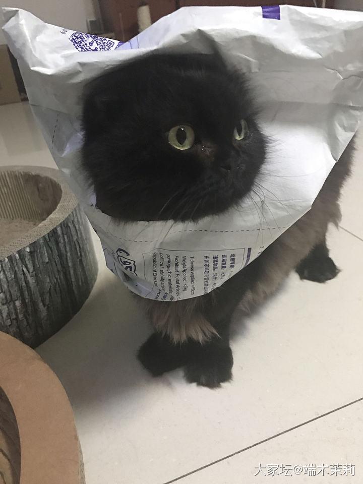 升大学了,晒个猫吧_猫