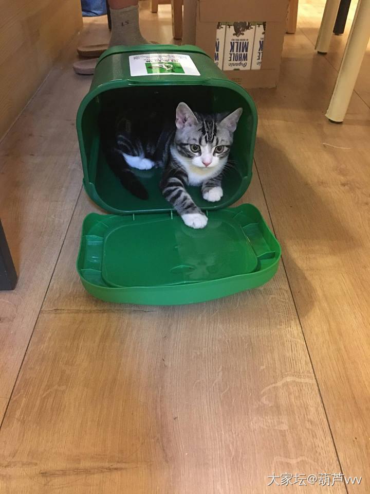 自己选的猫窝就是这么喜欢_猫
