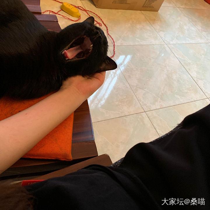 珠寶拍照高級背景布~_玉髓貓寵物手鐲翡翠