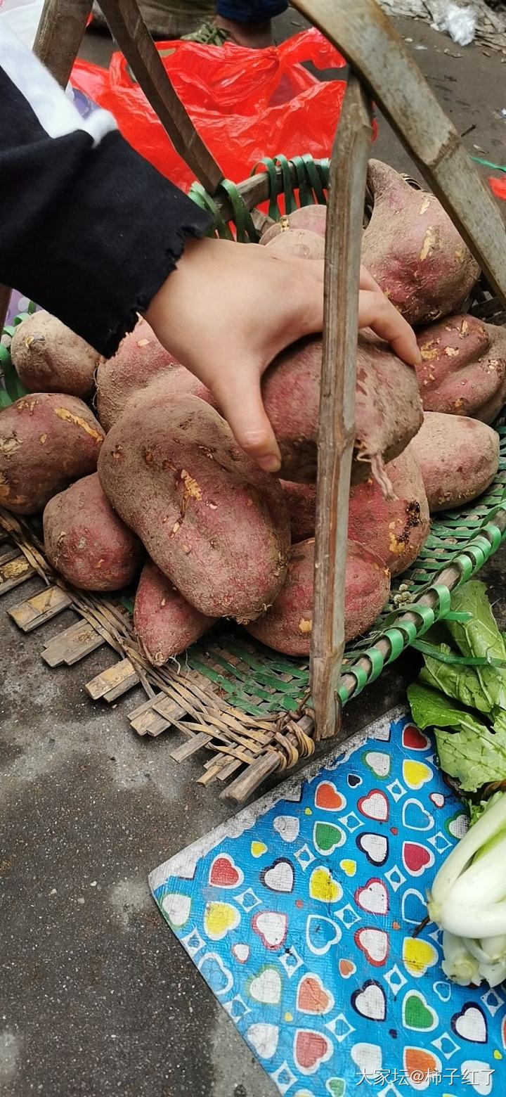 挖红薯_菜园
