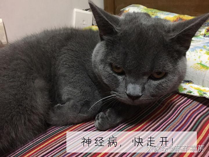 芒果宝宝很无奈_猫