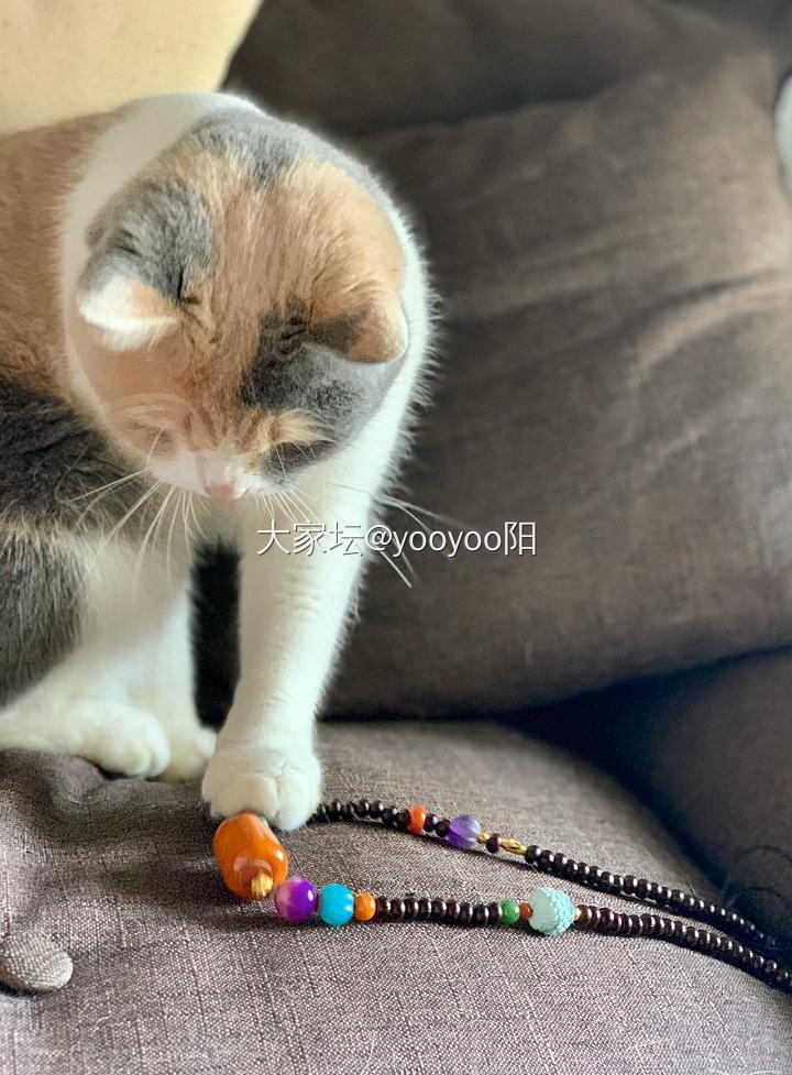 帮妹妹搭配的多宝项链被妹妹家的猫先看中了(*^_^*)哈哈哈哈_琥珀蜜蜡