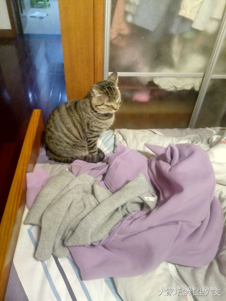 我在外面又有别的猫了哈哈哈_猫
