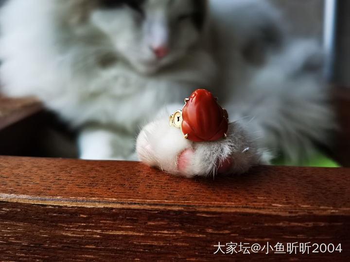 呱呱来财🥰_猫