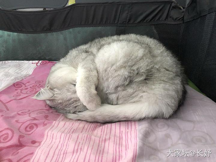 她……到底睡著了嗎?_貓