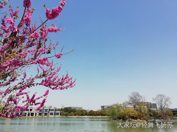 前天春光明媚,今天冷的哆嗦_景色