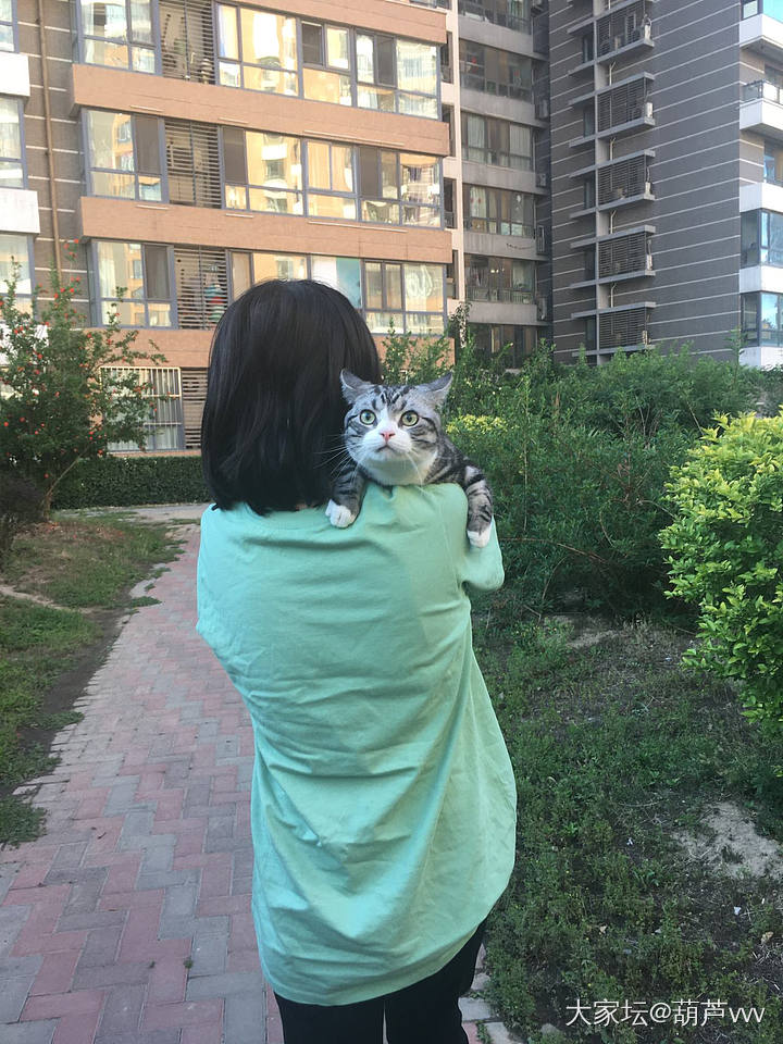 第一次被遛的怂咖_猫
