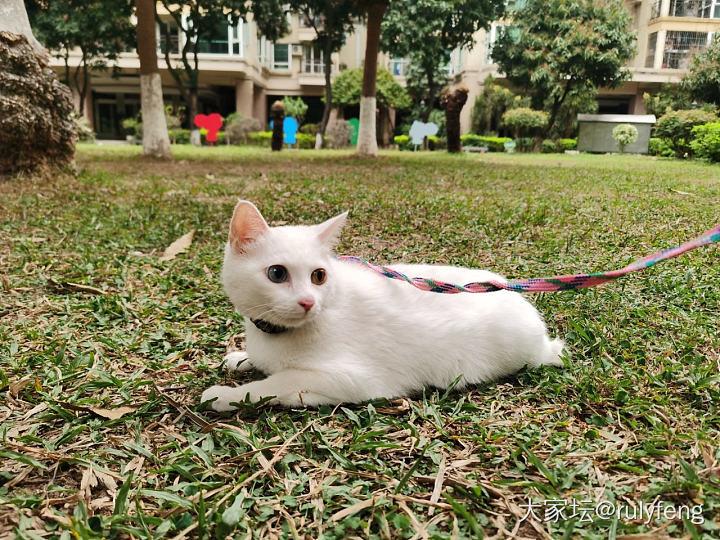 第一次遛貓_貓