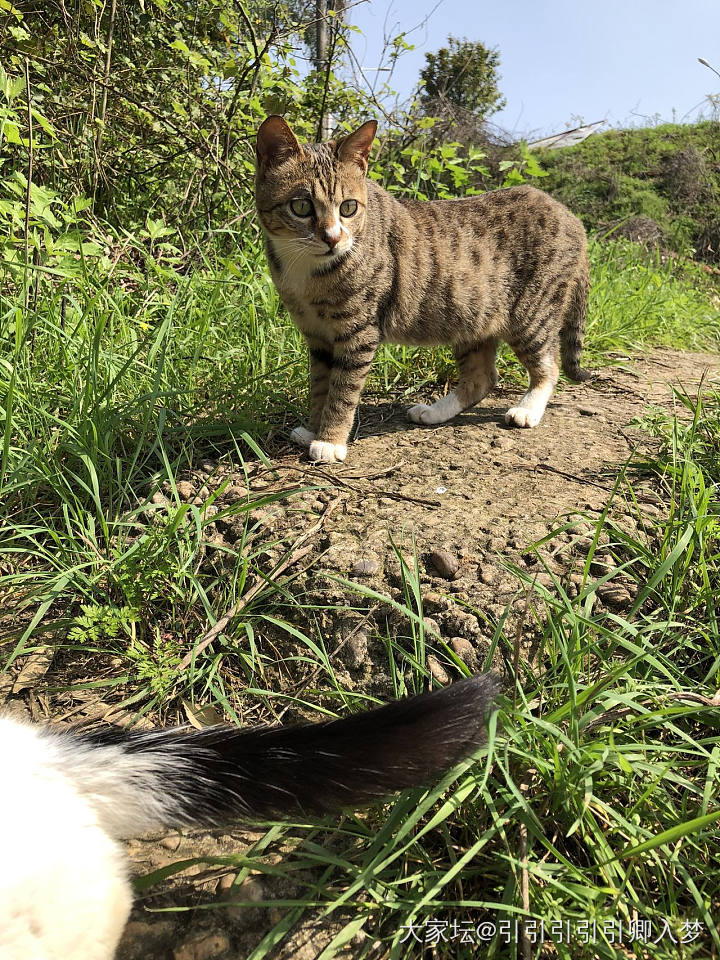 老妹撿的兩只大公貓,發情了。白貓每天追著梨花壓……_寵物