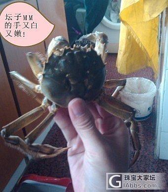 第三年团 正宗阳澄湖大闸蟹_有机宝石