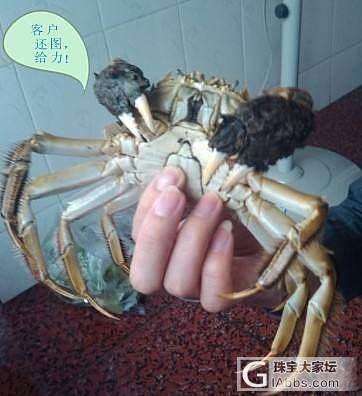 第三年团 正宗阳澄湖大闸蟹_珠宝