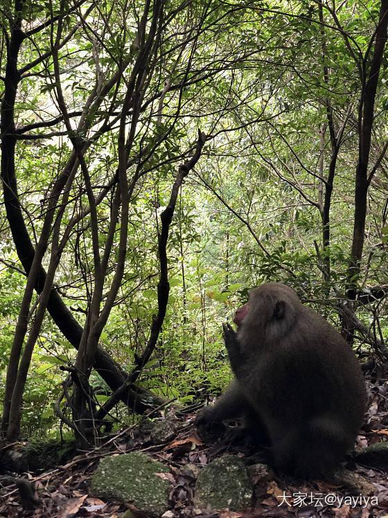 治愈系大自然的魅力_日本旅游