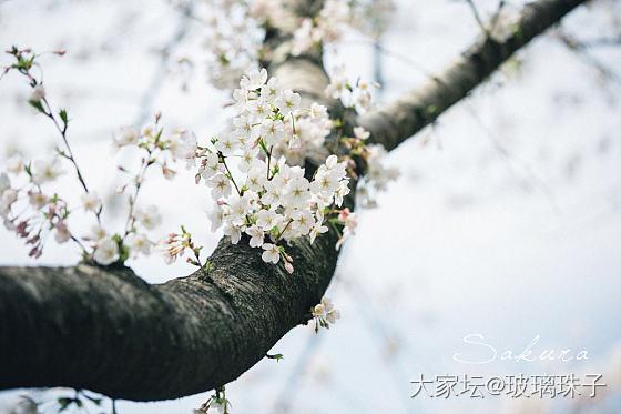 嘉兴的樱花也开了,路过一个厂区拍一拍,这家老板是个园艺爱好者