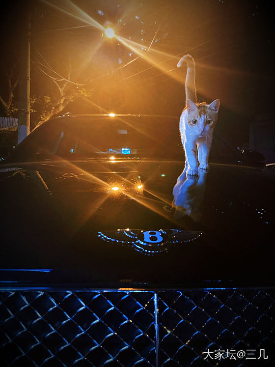 在高傲的猫生脚下 它只是个B_猫