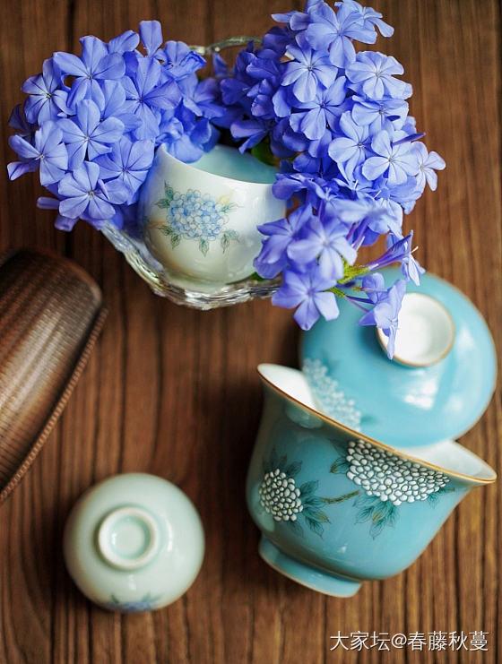 夏天泡茶,必须清凉一下😂😂😂_茶具