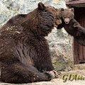 熊孩子被教训了