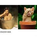 [转贴】——美女你好,你家缺猫吗?