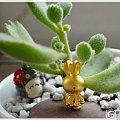 新年新礼物,可爱无敌小米菲兔,还有萝卜大合集咯~~