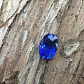 颜色那么漂亮的皇家蓝~~