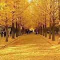 受伤的叶子 听见季节的吩咐