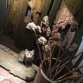 被老鼠撵得满屋跑的笨猫!