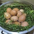三月三吃鸡蛋,上巳节你们都怎么过的?