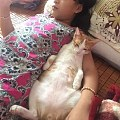 这只猫咪很黏小女主人,经常一起躺床上看手机,看着看着,就...