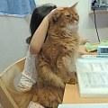 猫咪总被小主人一顿熊抱,眼神一脸嫌弃,但下一秒却让人笑晕...