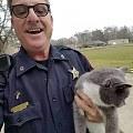 美国一车库夹着半截猫!邻居被这景象吓坏了,赶紧报警,原来...