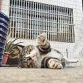 要是我我逗这只猫我会被笑死的😂😂