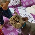 让朋友帮忙带自家猫咪去了一趟宠物医院,结果回来之后...
