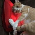 网友母亲节时给妈妈送的一个按摩器,结果被家里的猫看到后...
