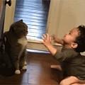 小主人想要亲猫咪,一开始猫咪是拒绝的,但经不住硬泡,最后...