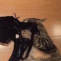 这猫非常喜欢妈妈的味道,竟会叼走Bra,做这种事,好羞射...