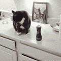 猫为什么喜欢将东西推到地上?