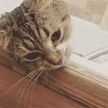 网友表示 家里的猫刚刚剪指甲还在不要不要的 一碰到水后就一脸眼神死的躺着...