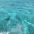 TAHITI 大溪地的海水与帕拉伊巴比较