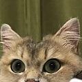 猫给另外一只猫舔毛,一直舔同一个地方,结果...