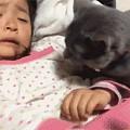 小主人不乖,被妈妈骂哭了,猫看到后...暖爆了...