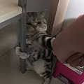 主人带猫洗澡,猫一开始是拒绝的,最后...