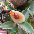 出几个小玩意,黄龙玉巧雕蜗牛,16mm缅甸金兰珠还有一个15mm荔枝冻瓜珠