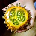 难看又难吃的水果之一……火参果