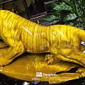世界仅存一只最美的老虎,只有在我国有