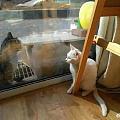 网友家的白猫正跟外面的一只猫对视着,被家里的黑猫看到后...