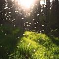 我向往那种安静的郊外,有纯粹的风和阳光,屋前有片片绿荫。夏日的黄昏和清晨,在...