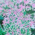 养的花开了,把我都惊艳到了。[耶][耶][耶][耶][耶][耶][耶]好美[...