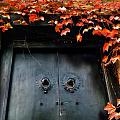 济南的秋天之二
