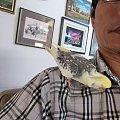 这只调皮的鹦鹉。。。